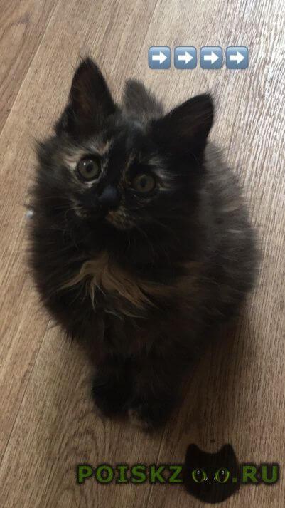 Пропала кошка котенок г.Энгельс