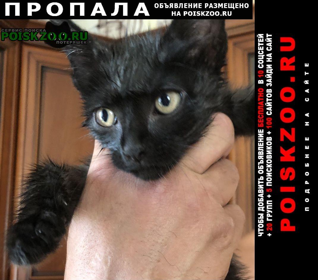 Пропал кот Можайск