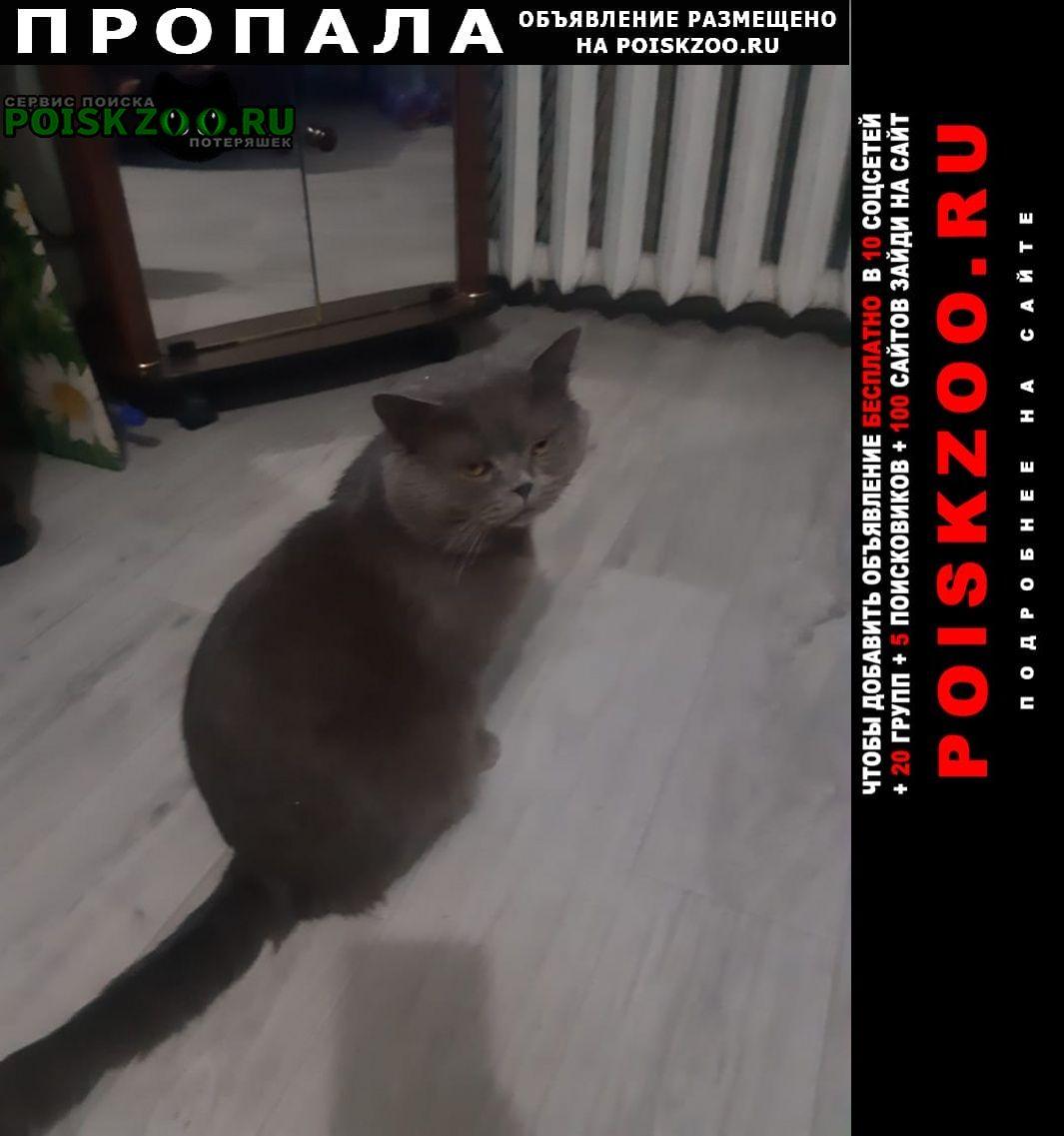 Пропал кот британец.г Новороссийск