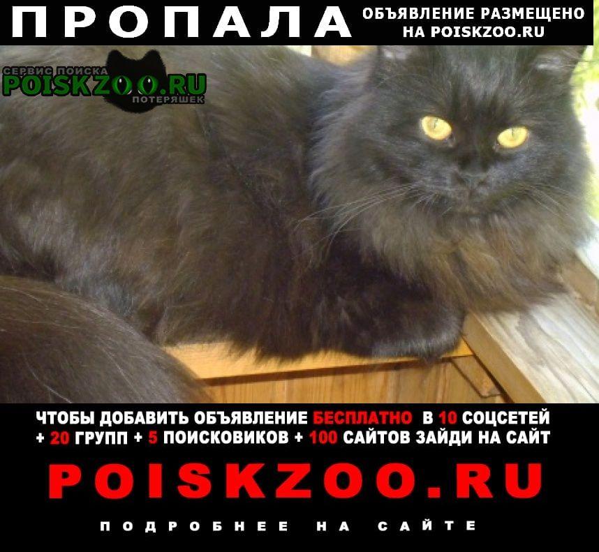 Пропала кошка масяня Пермь