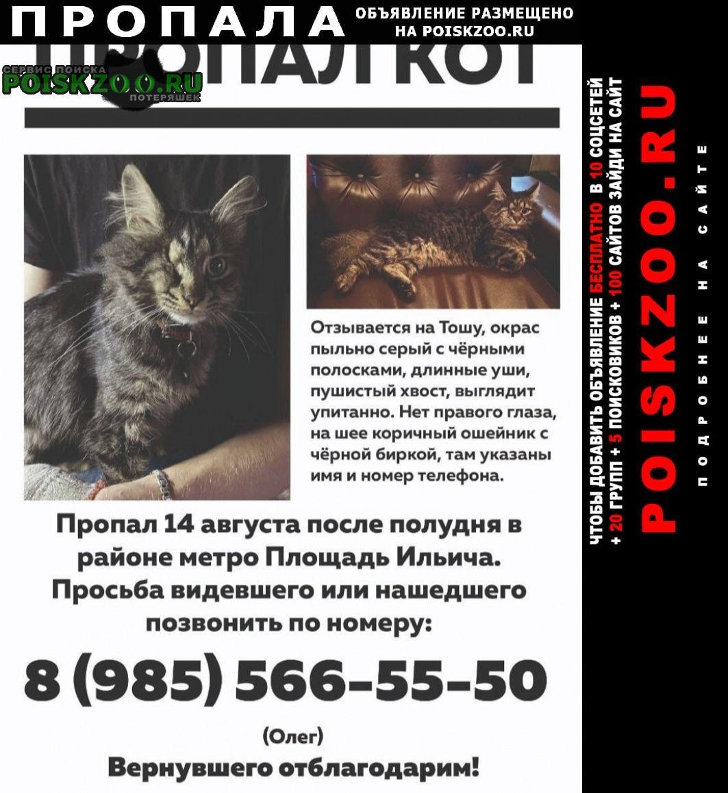 Пропал кот. Москва