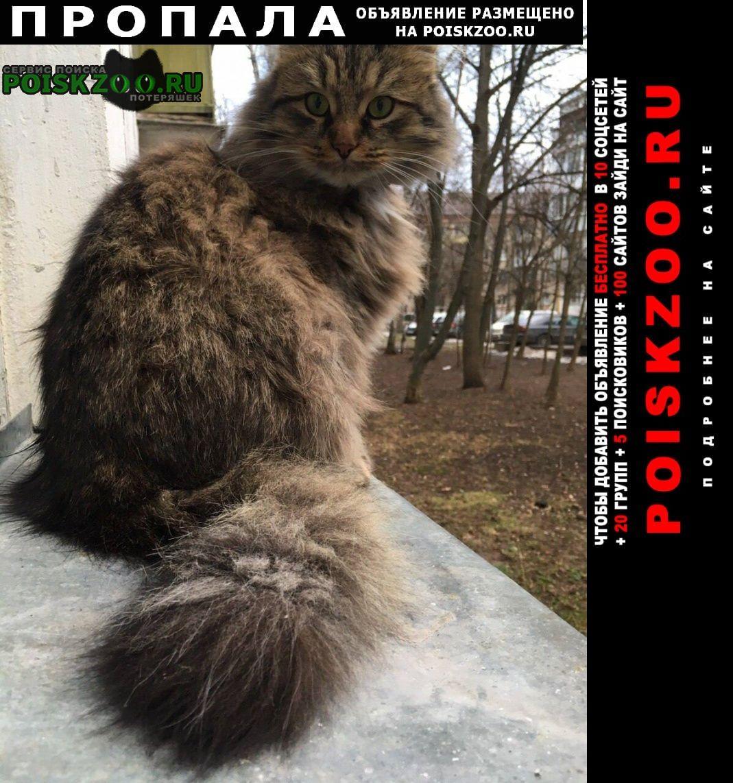 Пропал кот сибирский - окрас похож. Троицк