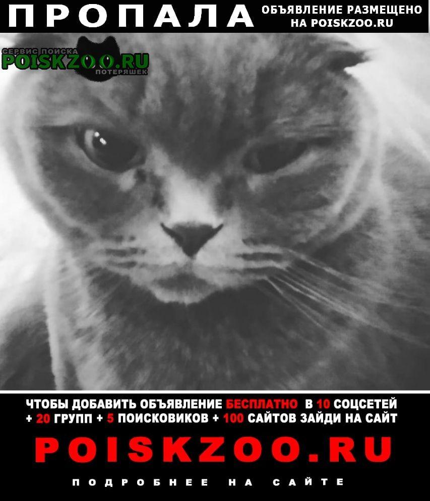 Пропала кошка шотландськая вислоухая Ильичевск