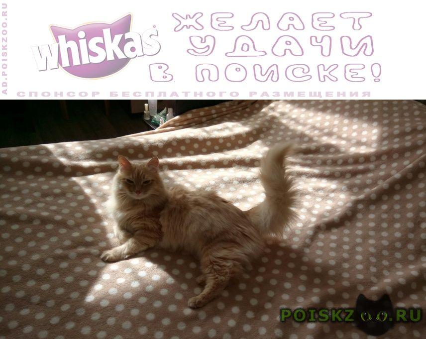 Пропал кот. д.жабкино, снт нектар. г.Москва
