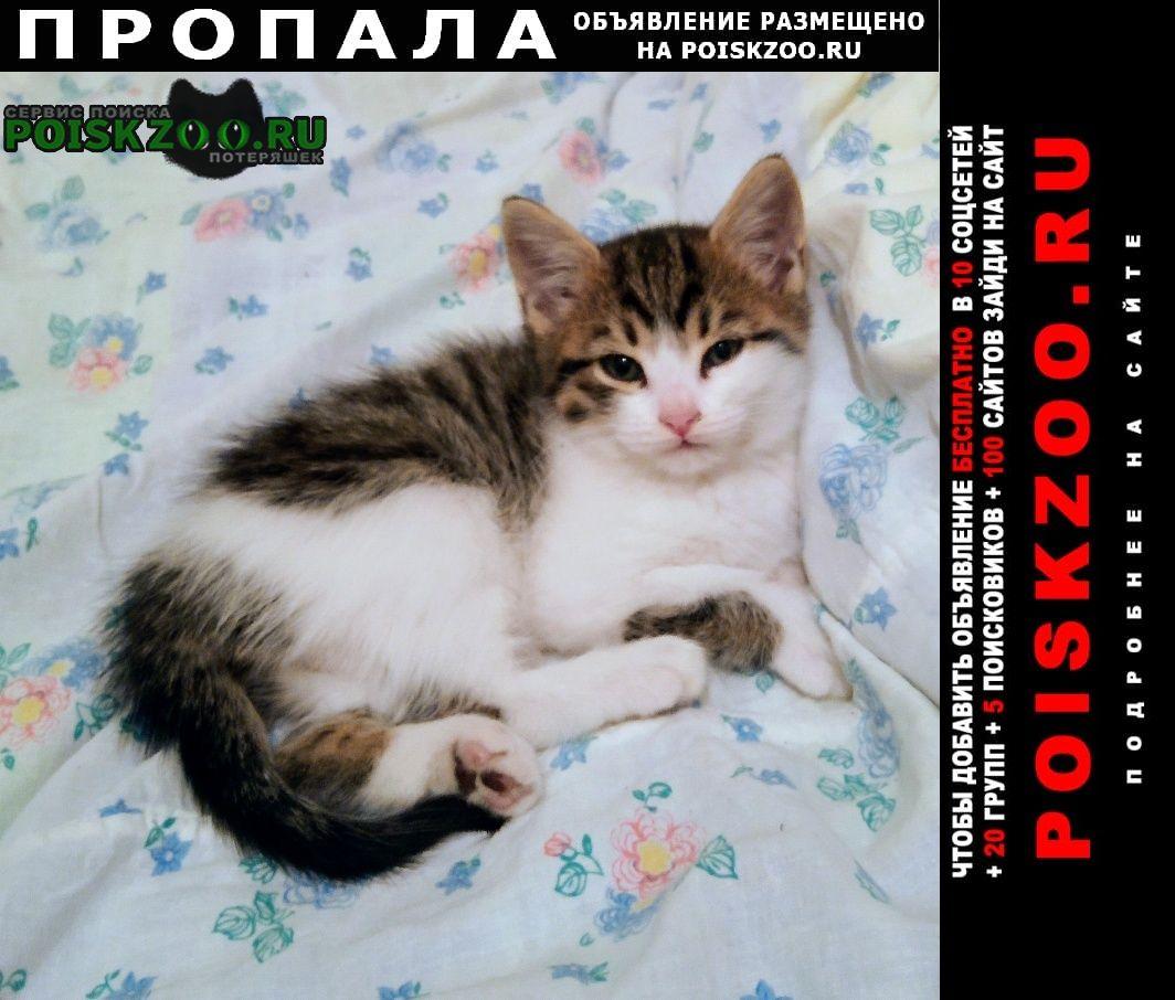 Пропала кошка 2-х месячная кошечка 22 сентября Новосибирск