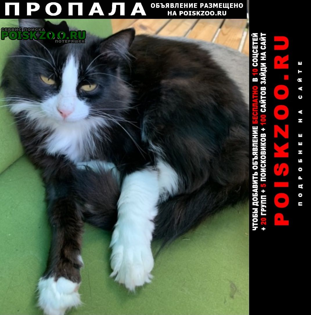 Коломна Пропала кошка