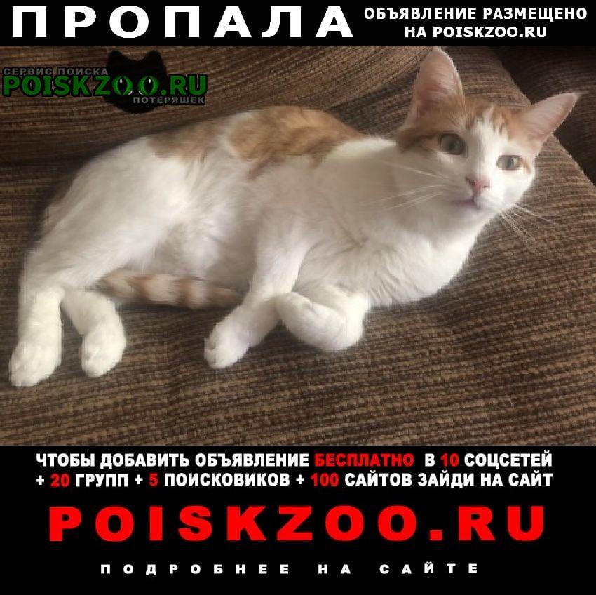 Пропал кот 05.06 бело-рыжий большая набережная Москва