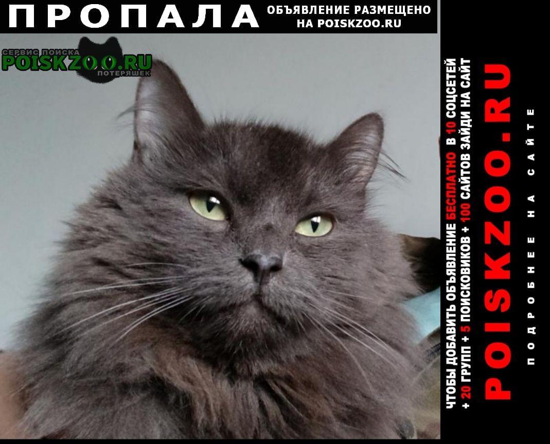 Пропал кот серый пушистый Москва