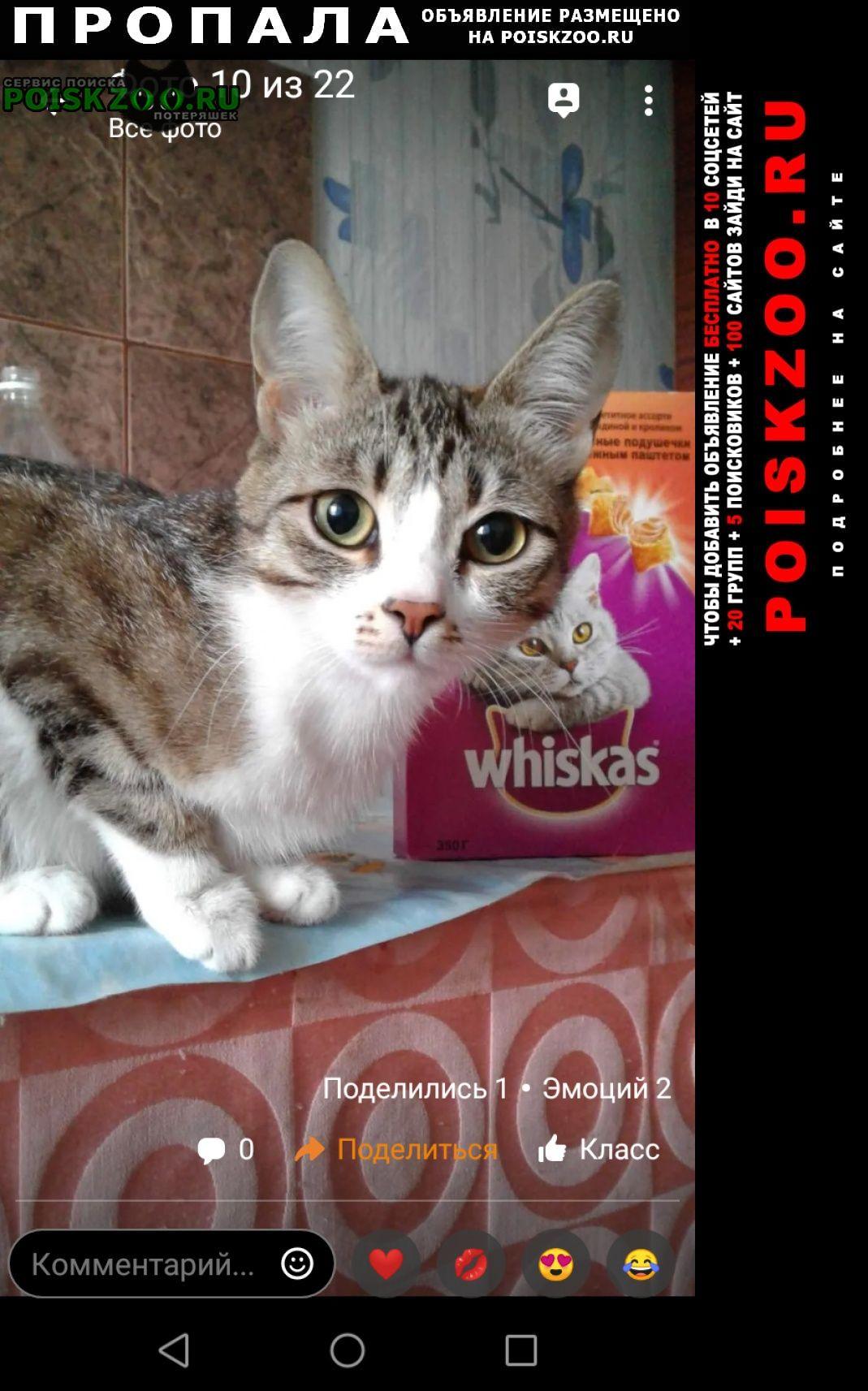 Пропала кошка рыся, найдись г.Иркутск