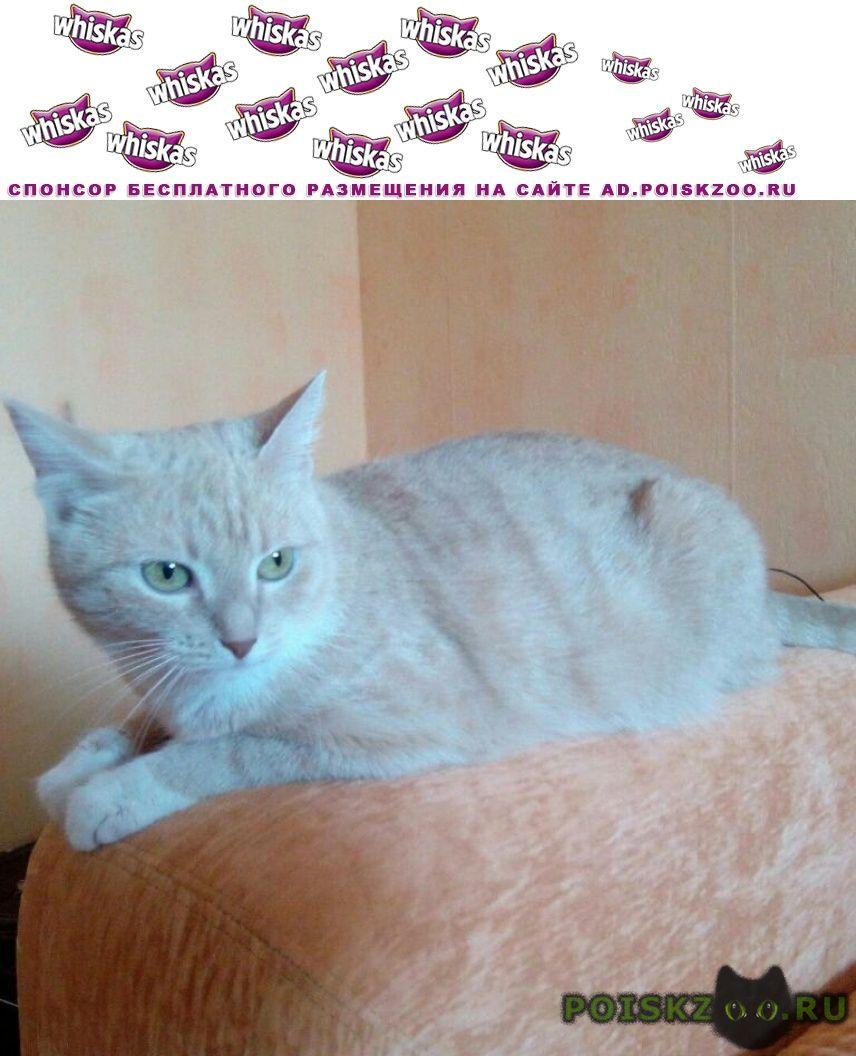 Пропала кошка район трёхгорка в г.Одинцово