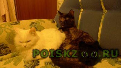 Пропала кошка и кошки г.Омск