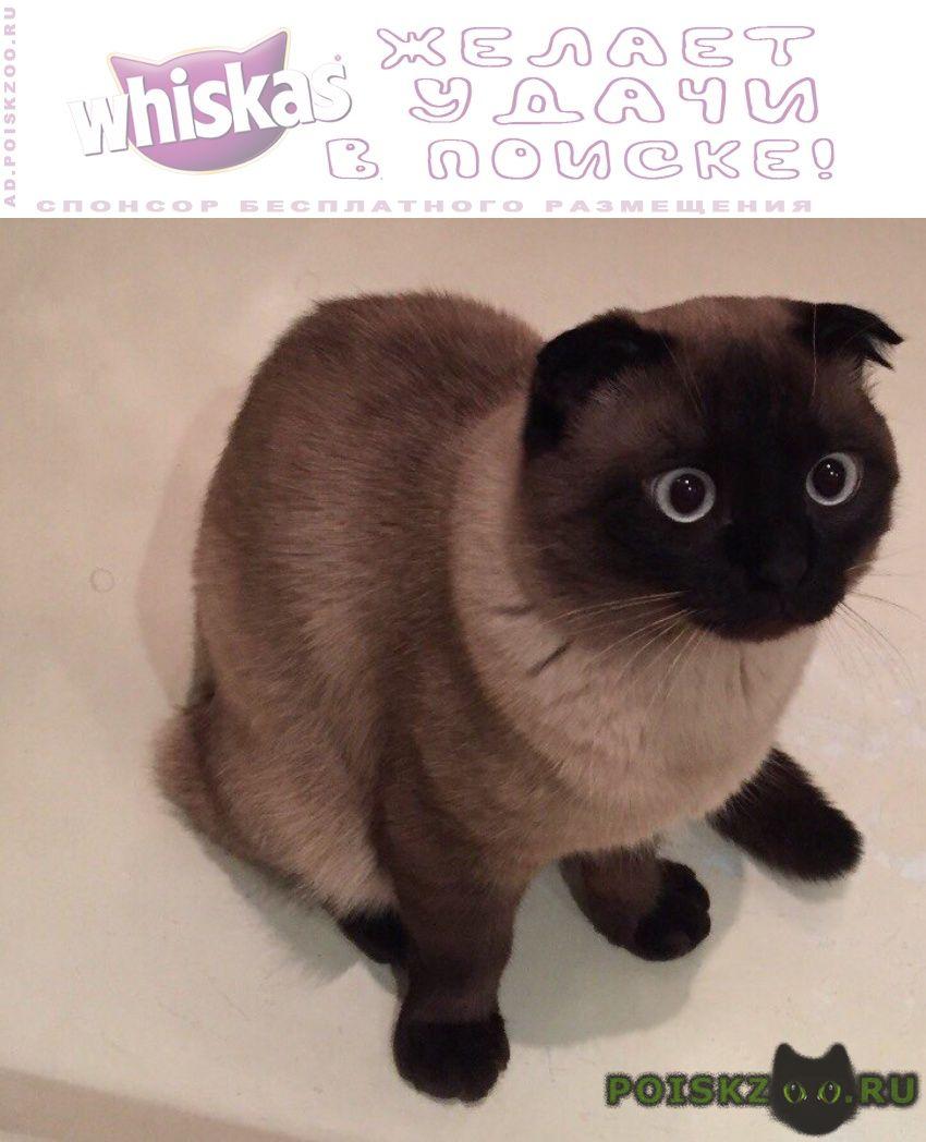 Пропал кот сиамский вислоухий г.Москва