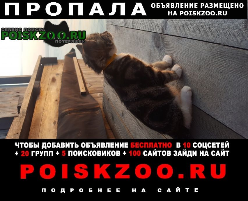 Хабаровск Пропала кошка на трассе ванино-