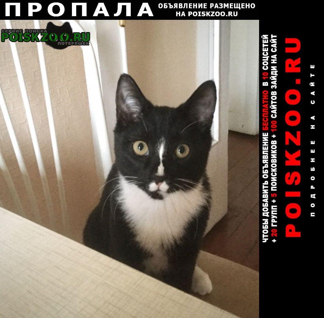 Загорянский Пропал кот черно-белый в п.