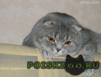 Пропал кот г.Серпухов