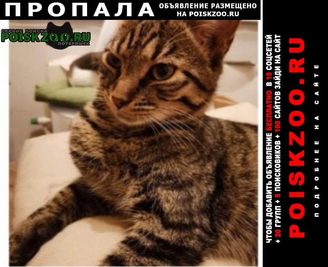 Пропал кот Зеленоград