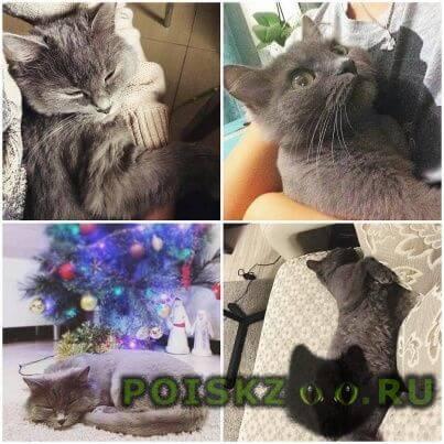 Пропала кошка г.Жуковский