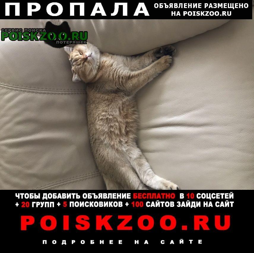 Пропало домашнее животное кот Миллерово