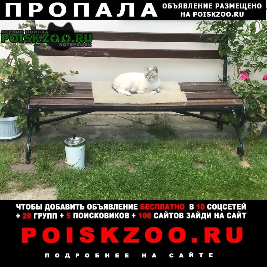 Пропал кот молодой Купавна