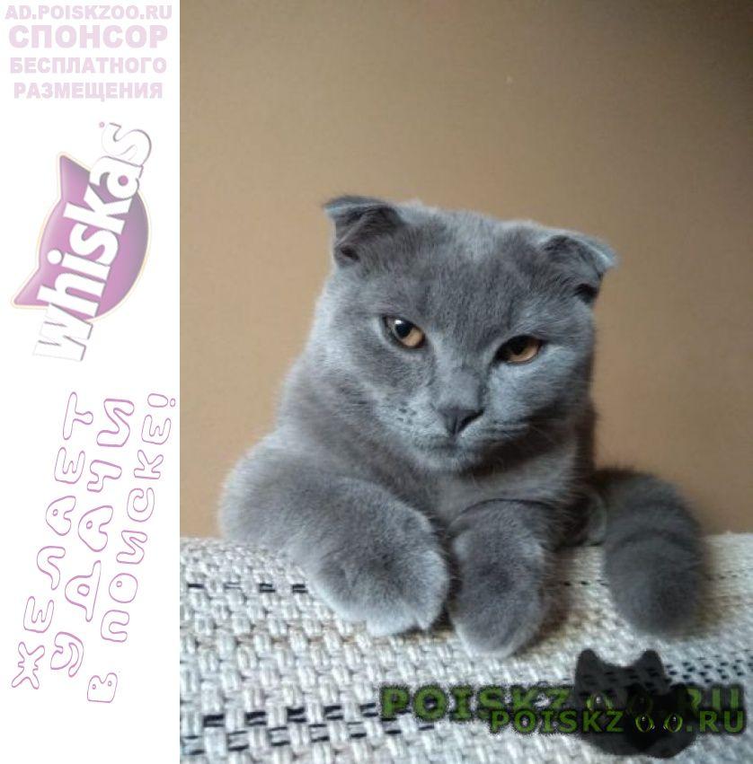 Пропал кот вознаграждение гарантирую г.Москва