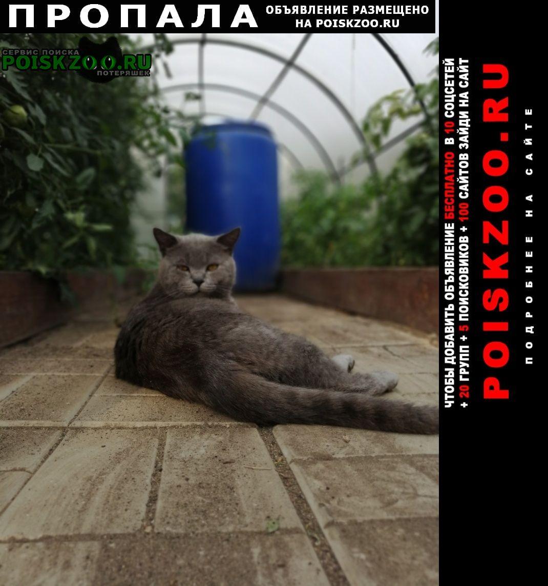 Коломна Пропал кот в районе деревни подлужье.