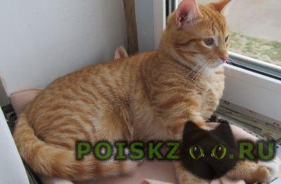Пропал кот в ом р-не г.Воскресенск