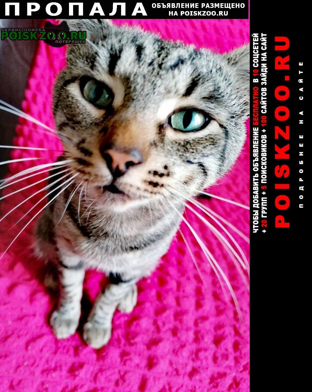Москва Пропала кошка кот обруч в ростокино в свао