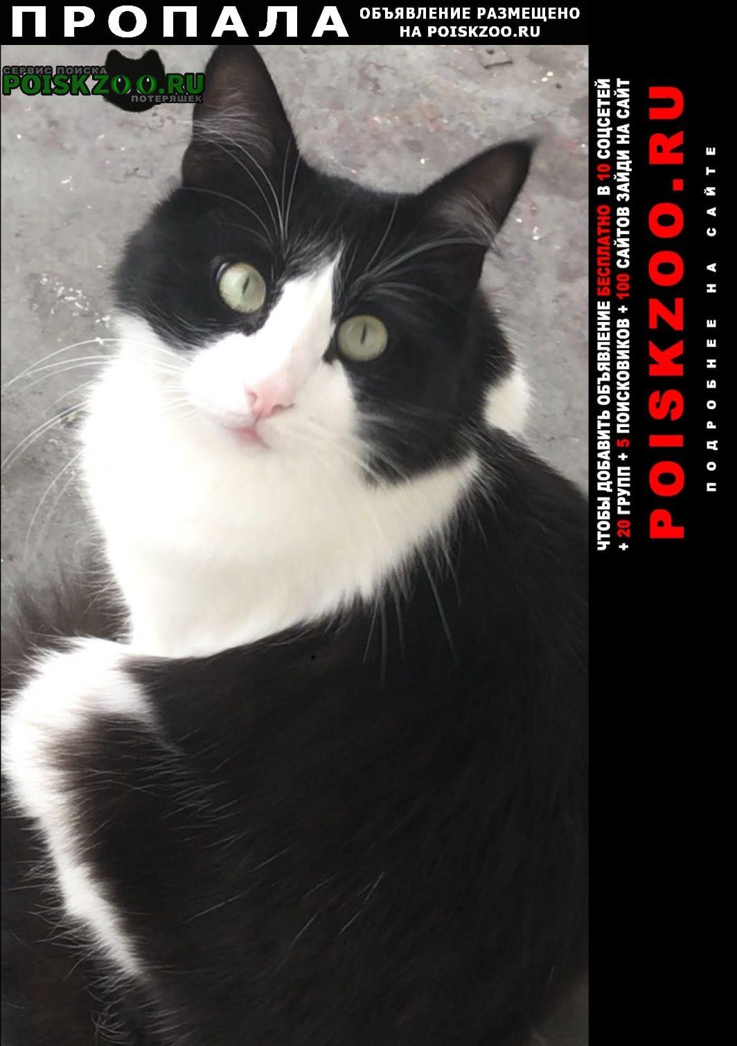 Пропал кот чёрно-белый Москва