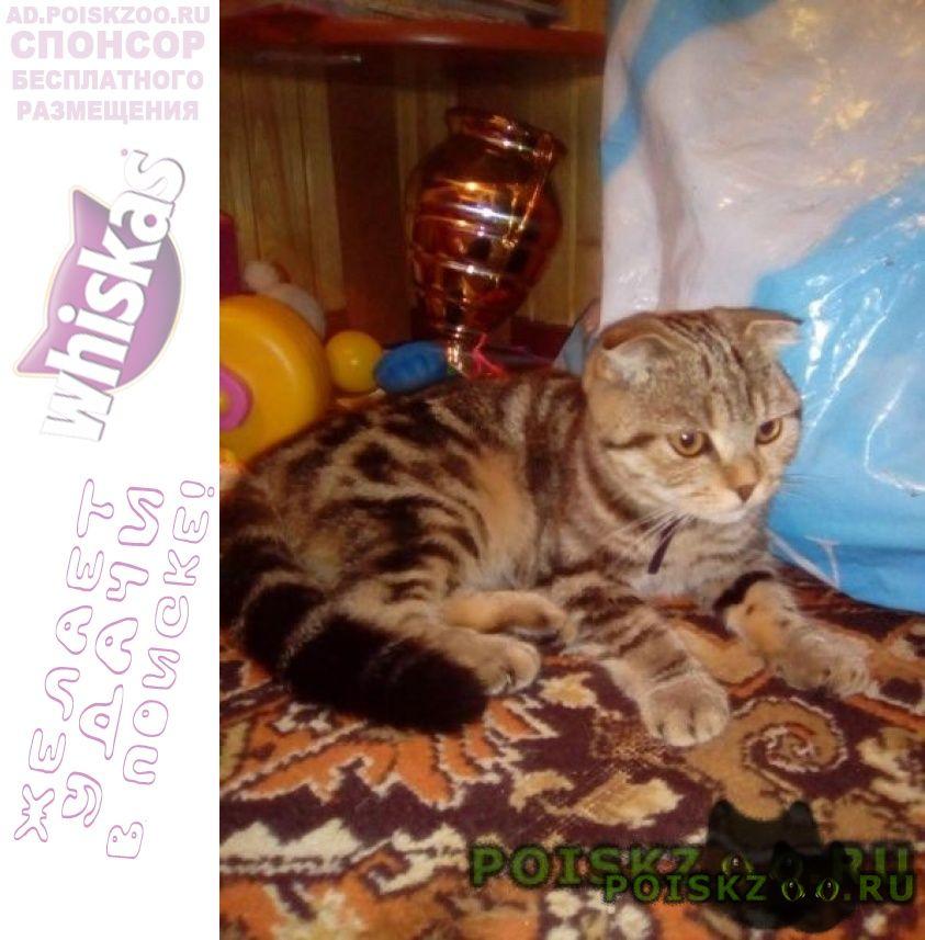 Пропала кошка повтор г.Москва