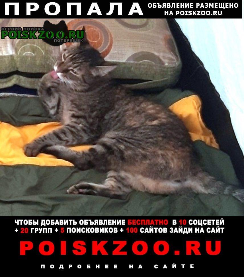 Пропала кошка (зеленогорск - приморск) Санкт-Петербург