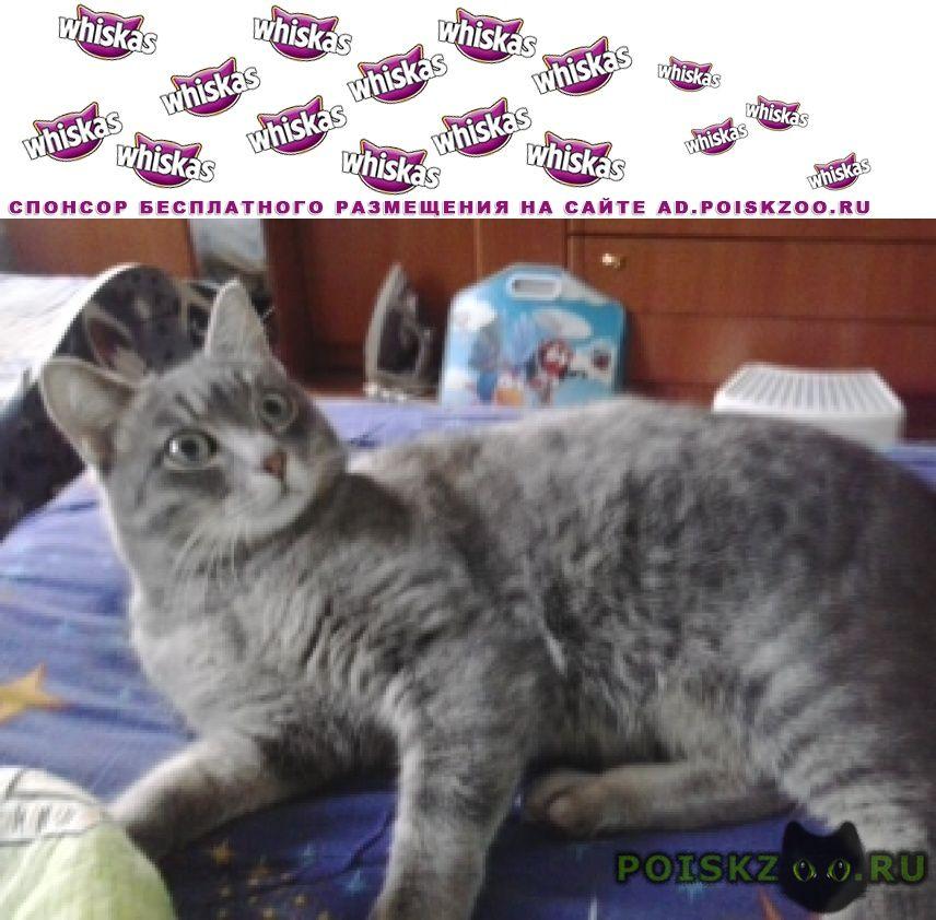 Пропал кот кастрирован г.Омск