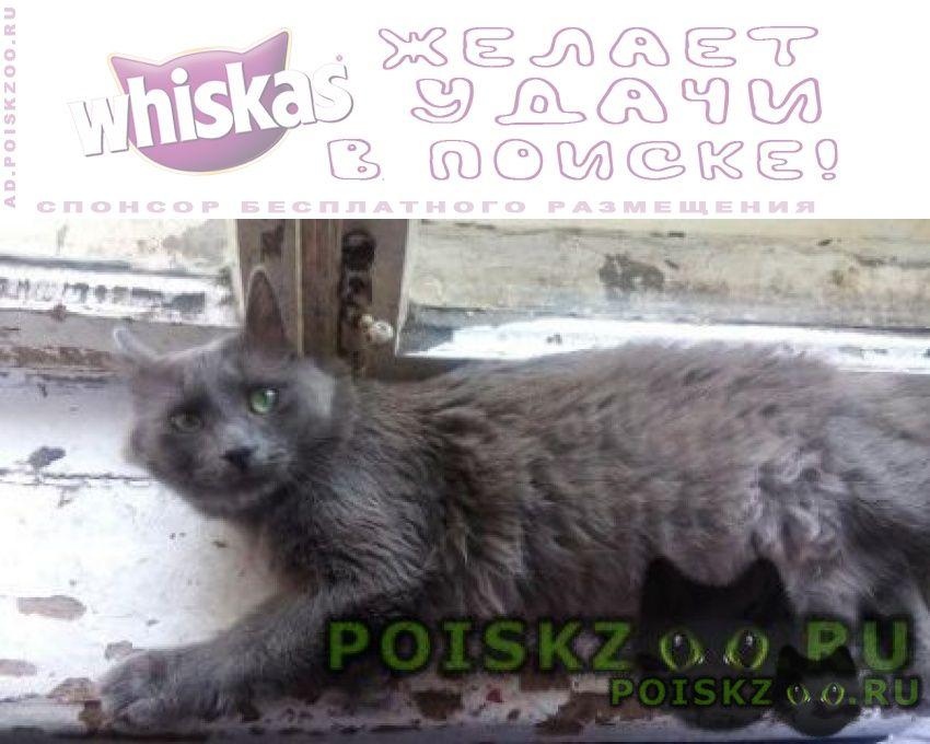 Пропал кот серый г.Пенза