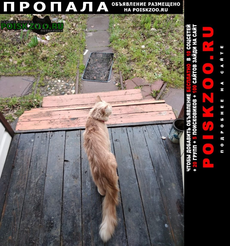 Пропала кошка требуется ваша помощь Яхрома