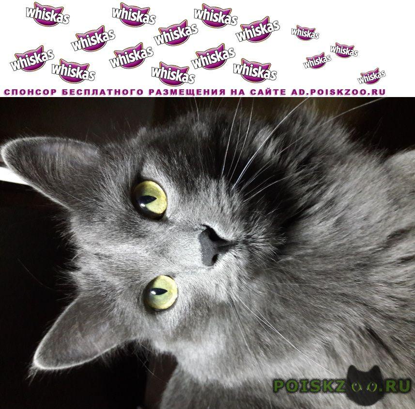 Пропала кошка г.Новороссийск