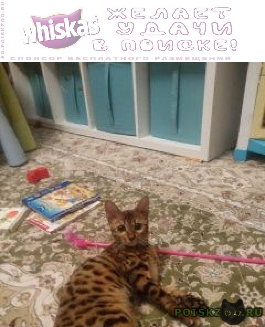 Пропала кошка г.Люберцы