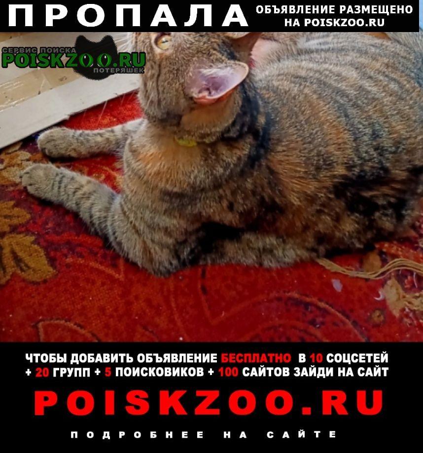 Пропала кошка Краснодар