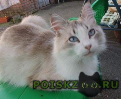 Пропала кошка г.Усть-Лабинск