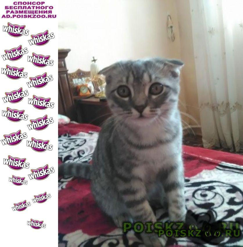 Пропал котик вислоухий шотландский г.Энгельс