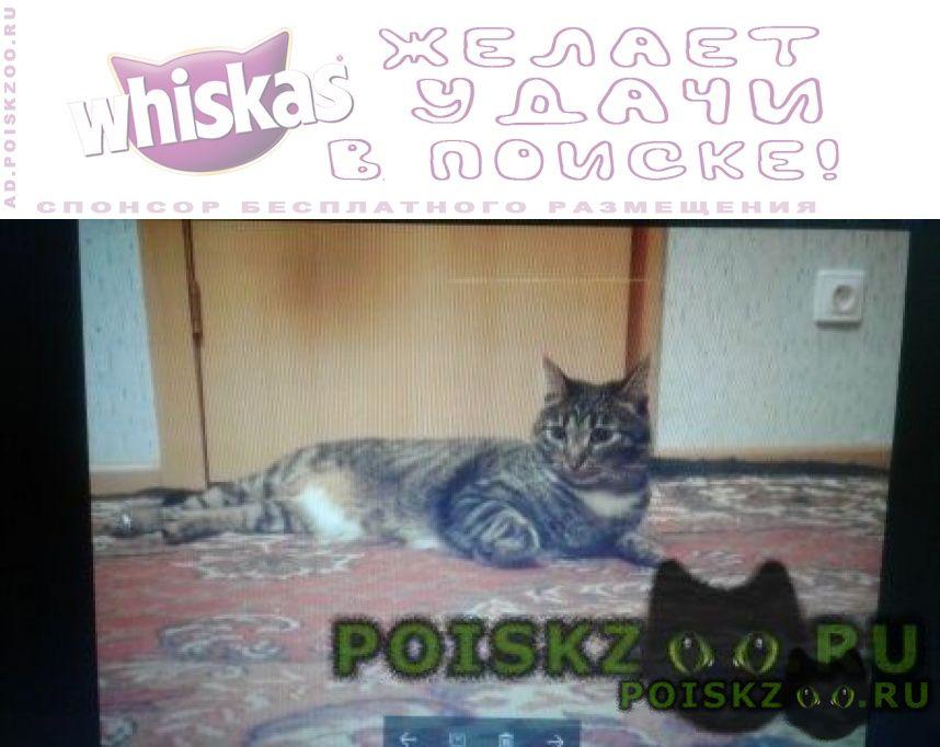 Пропал кот просим помощи. г.Щелково