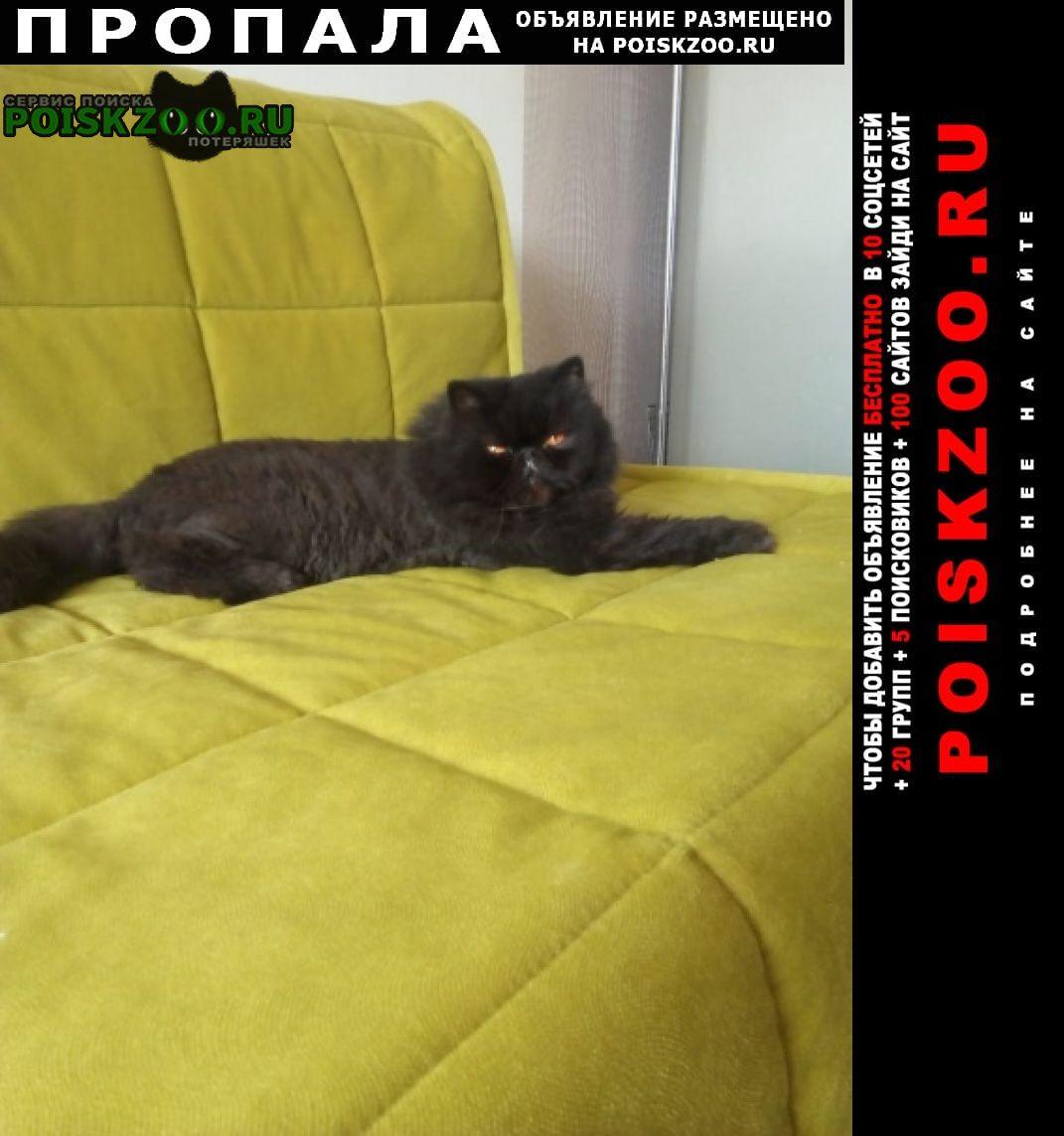Пропал кот любимец, Краснодар