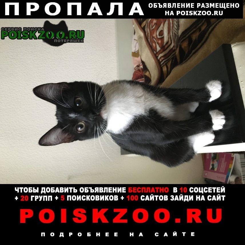 Пропала кошка Томилино