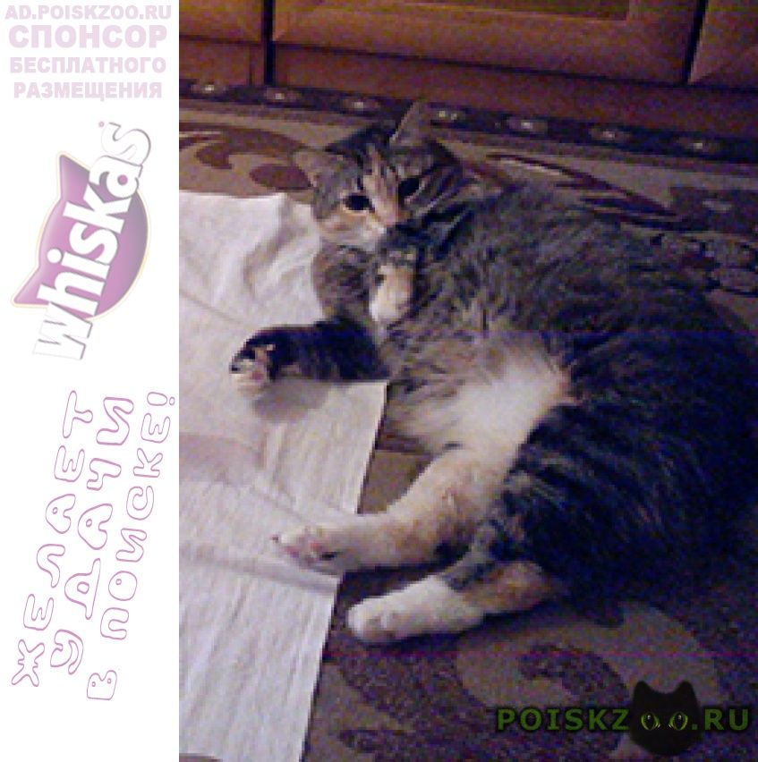 Пропала кошка помогите найти г.Петрозаводск