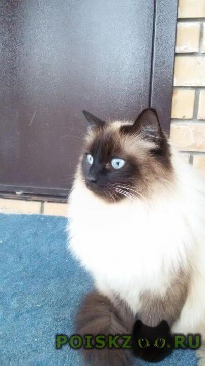 Пропал кот в районе медгородка (ркб, леруа мерлен). г.Казань
