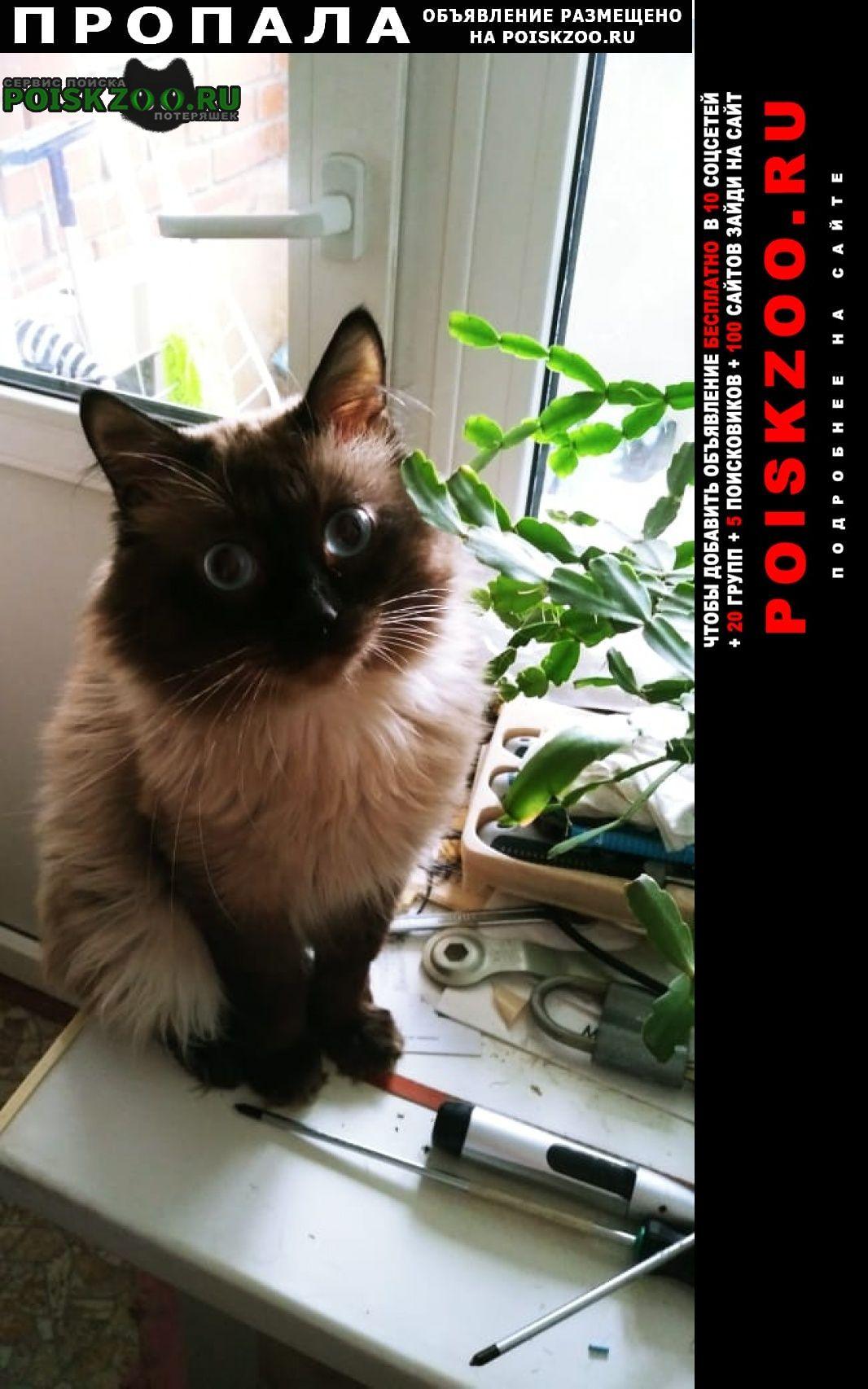 Йошкар-Ола Пропала кошка любимый кот