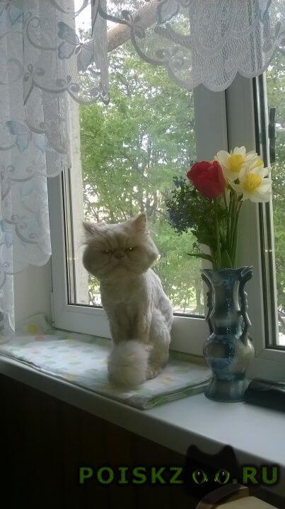 Пропала кошка кот г.Волжский (Волгоградская обл.)
