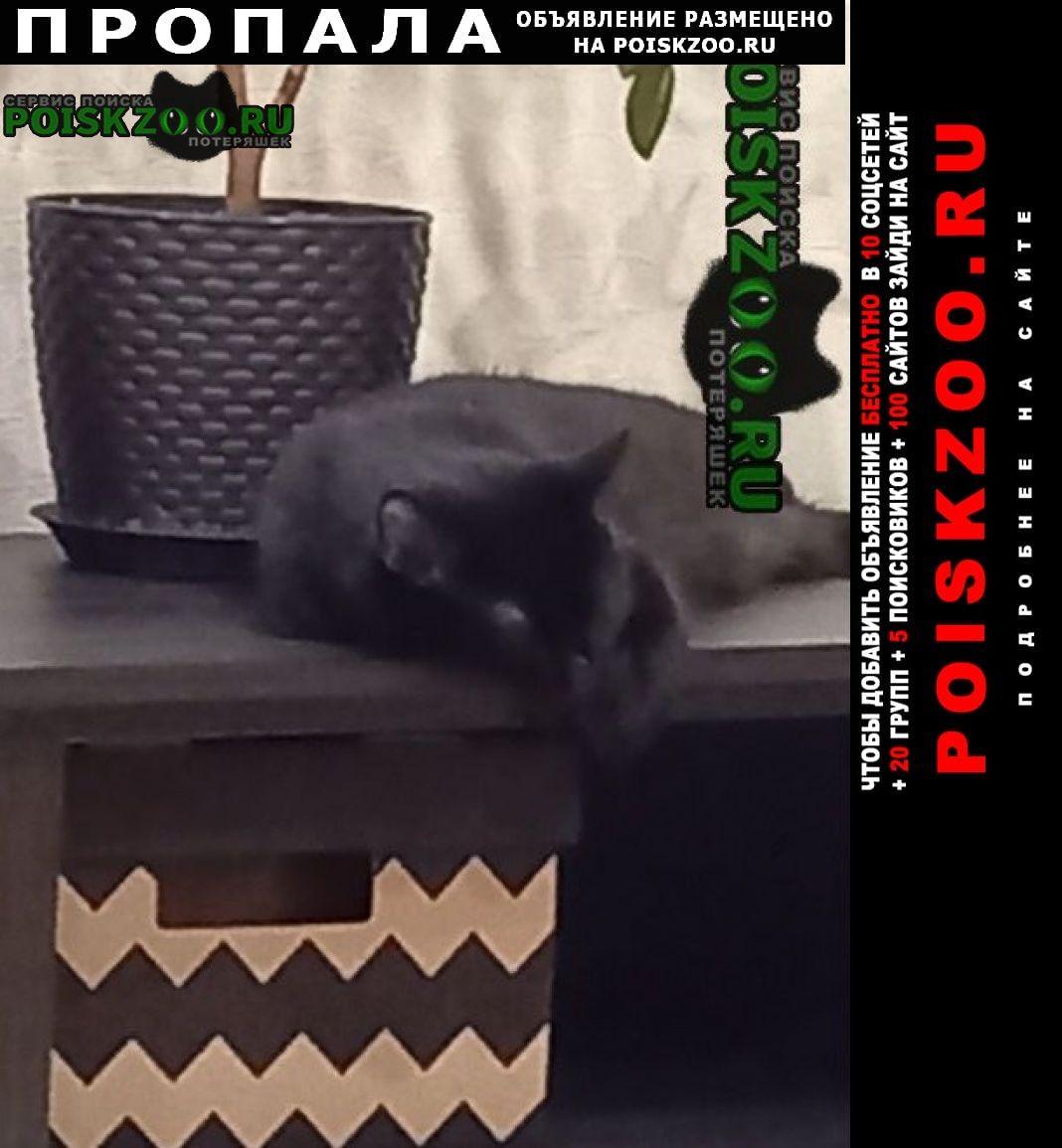 Пропала кошка Старый Оскол