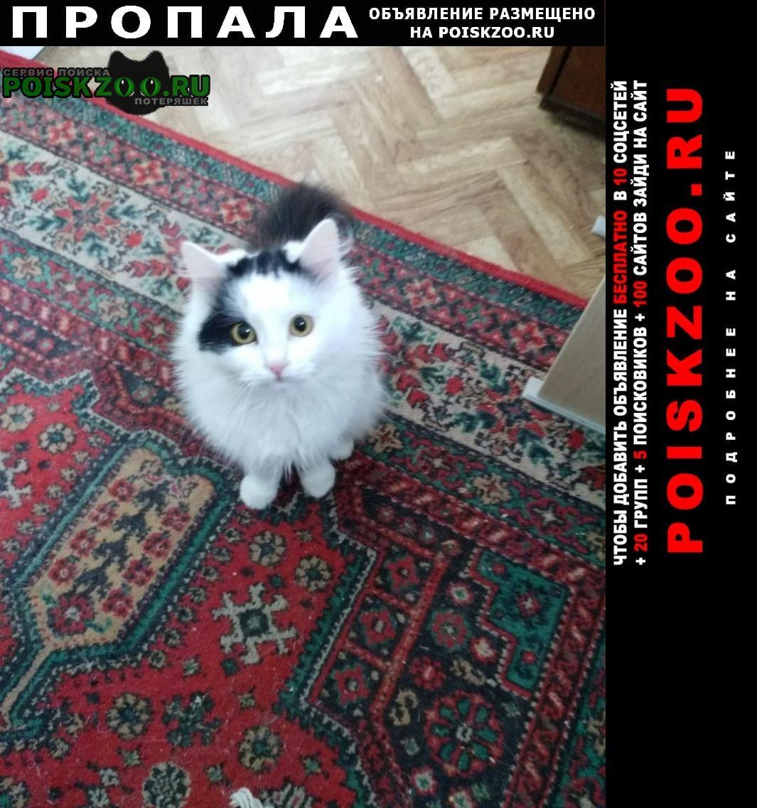 Пропала кошка Орск