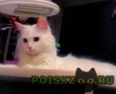 Пропала кошка помогите найти белую взрослую кошку г.Самара