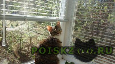 Пропала кошка наш член семьи очень прошу помо г.Жуковский