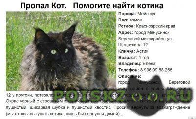 Пропал кот г.Минусинск